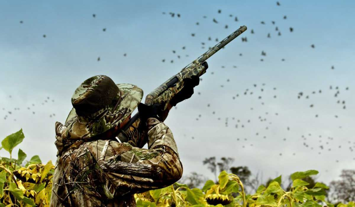 Best Choke For Dove Hunting