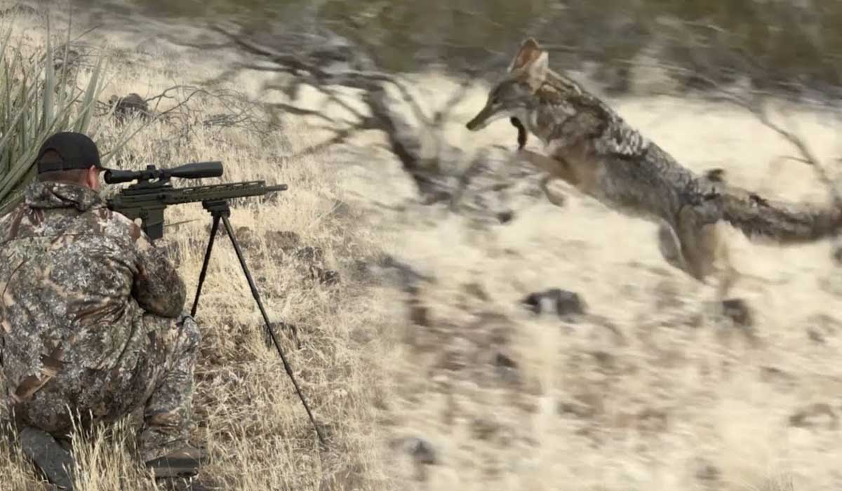 Night Vision Scope For Coyote Hunting